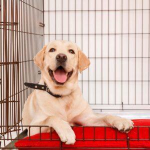 Hondenbenches